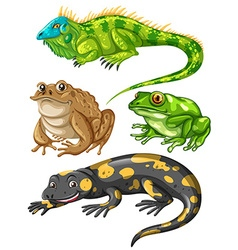 Different kind of frogs and lizards vector image