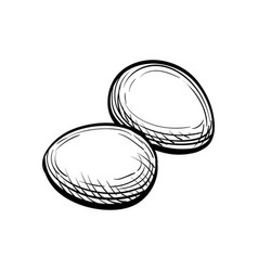 hand drawn of eggs vector image