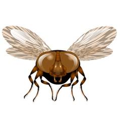 macro fly vector image vector image