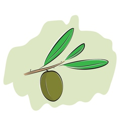 Olive on branch vector image vector image