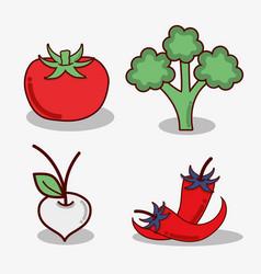 Tomato broccoli onion and chilli vegetable vector