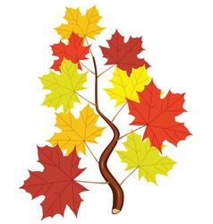 branch with fall maple leaves vector image