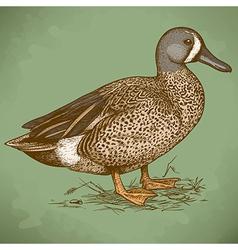Engraving duck retro vector