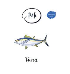 Sea fish tuna vector