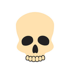closeup of beige skull on vector image