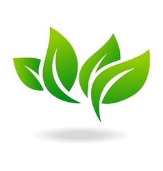 Eco icon green leaf isolated vector image vector image