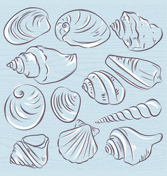 Set of different types of clams and shells on a vector