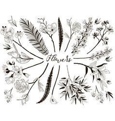 big collection of floral design elements vector image vector image