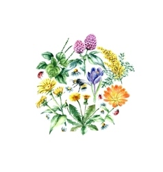 Collection of hand drawn medical herbs and plants vector