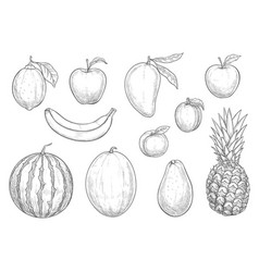 fresh exotic fruits sketch isolated icons vector image vector image