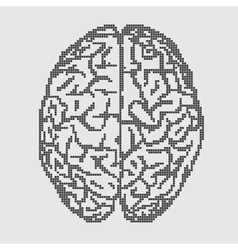 Brain on gray background vector