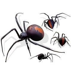 Black widow spider vector