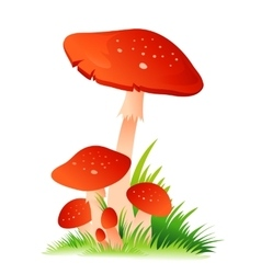 Red mushroom amanita with grass on white vector