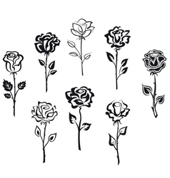 Set of rose flowers isolated on white background vector