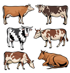 Farm cows dairy cattle in cartoon style vector