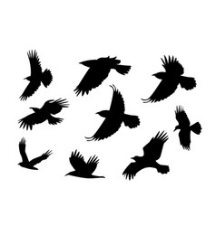 Set of silhouette flying raven bird with no leg vector