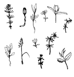 Set of ink drawing herbs and leaves vector