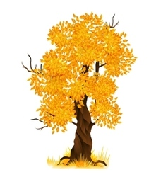 autumn tree isolated on white vector image vector image