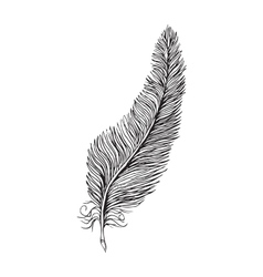 line drawing feather vector image