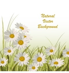 Nature background with green grass and daisies vector image vector image
