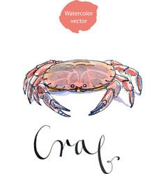 serrated mud crab vector image