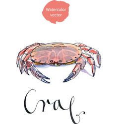 serrated mud crab vector image vector image