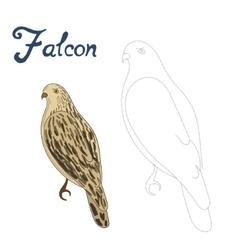 Educational game connect dots to draw falcon bird vector