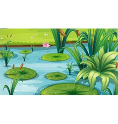 A pond with many plants vector