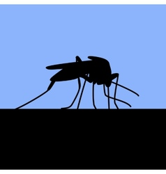 black silhouette of biting mosquito vector image