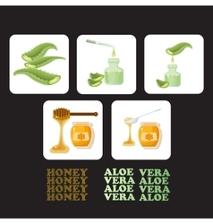 Set icons with pieces of aloe vera and honey vector