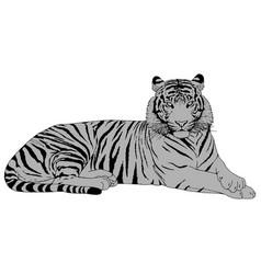 Tiger head vector