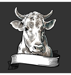 Cows head with ribbon Hand drawn in a graphic vector image