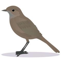 nightingale vector image vector image