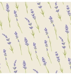Seamless pattern with lavender flowers vector image