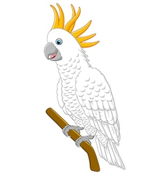 White parrot sitting on a branch Isolated vector image vector image
