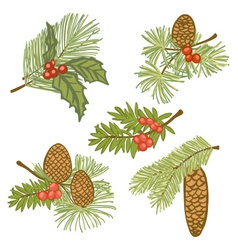 Evergreen branches with cones and vector