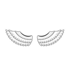 wings on white background vector image vector image