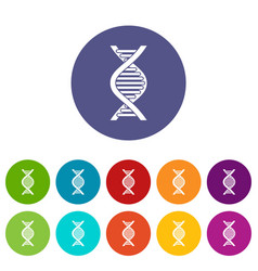 Dna strand set icons vector