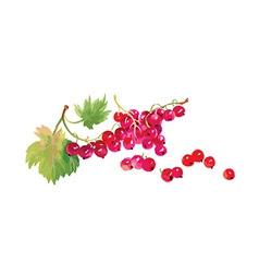 Artistic fruit design vector image