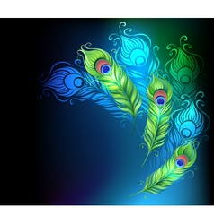 Bright peacock feathers vector