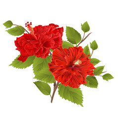 Two red hibiscus hibiscus stem tropical flower vector