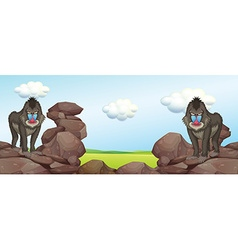 Two baboons standing on rocks vector image