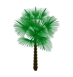 Green palm tree isolated on white background vector
