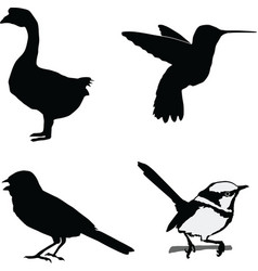 birds of the world vector image