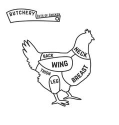 Cuts of chicken butcher diagram vector image vector image