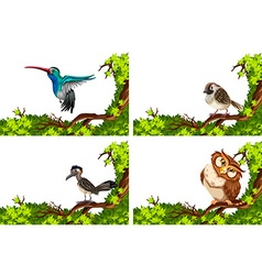 Different wild birds on the branch vector