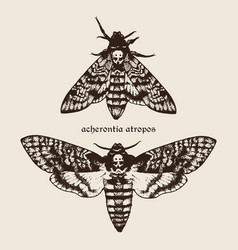 Hand drawn deaths head hawk moths vector