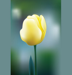 yellow tulip flower blossom vector image