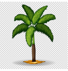 Palm tree on transparent background vector