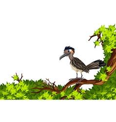Wild bird standing on branch vector